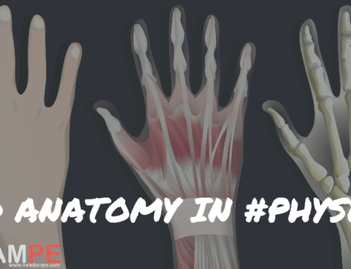 My New T: Making Anatomy 4D in Physed